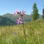 Schöne Pflanzen überall