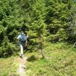 Zauberwaldwege