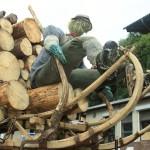 Holzfuhre