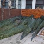 Über 100 Christbäume zieren das Ortszentrum von Großarl