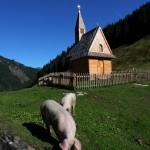 """Ohne Worte. - Oder: Wer im Leben viel """"Schwein"""" hat, sollte nicht vergessen, dem Herrgott dafür zu danken."""