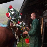 Richard verpasst den Kühen den rechten Kopfschmuck, Anita geht ihm Helfend zur Hand