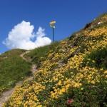 Alpen-Wundklee am Schuhflicker_3