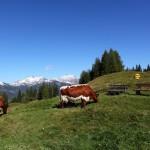 Sattes Grün vor weißen Bergen - an der Bichlalm
