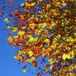 Herbstblätter im Großarltal