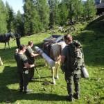 Haflingerpferde transportieren das neue Kreuz bis zum Filzmoossattel