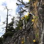 Der Kampf ums Überleben von Blumen und Bäumen hier oben ist ein harter