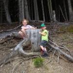 Märchenhafter Wald - das Reich von Zwergen, Kobolden und .... zukünftigen Gamsjägern