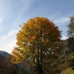 Farbenfroher Herbstbaum
