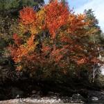 Herrliche Farben zaubert der Herbst