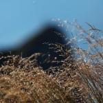 Gipfelgras vor der Silhouette der Arlspitze