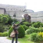 Seeadler auf der Burg Hohenwerfen