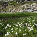 Hier tobt sich die Natur nochmals aus und zeigt was sie kann ...