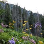 Üppig blüht die Natur vor diesem absterbenden Waldstück