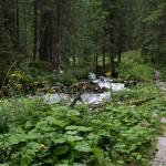 Durch eine alpine Urwaldlandschaft führt der Steig talwärts