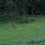 Im Rotwildgehege im Talschluss herrst schon Abendruhe.