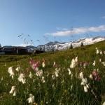 Wollgras und Lichtnelken übersäen die Wiesen