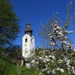 Kirche Grossarl Apfelblüte_2