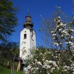 Kirche Grossarl Apfelblüte_5