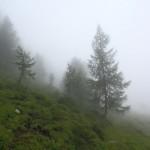 Lärchen brechen druch die Nebelwand
