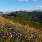 Unzählige Glockenblumen übersähen mit ihrem zarten Lila die Almwiesen