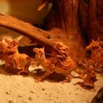 Wurzelkrippe mit geschnitzten Königen