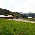"""Ziel unserer """"wagemutigen"""" Wanderer: Die Unterwandalm, 1.600 m"""