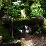 An diesem Brunnen am Weg zur Unterwandalm musste ich einfach kurz Halt machen um die herrliche Stimmung einzufangen.