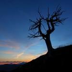 Kurz vor Sonnenaufgang, links unten Bischofsmütze und Dachstein