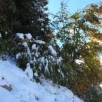 Bäume und Sträucher leiden unter der Last des Schnees
