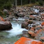 """Die """"Rote Grünalge"""" färbt die Steine in diesem kräftigen Rot-Orange"""