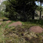 Unzählige Ameisenhaufen säumen den Weg