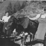 Als die Pinzgauer Kuh schon längst erfunden war - vor 70 Jahren auf der Karseggalm mit Sennerinnen Maria und Walpurga