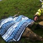 Auch die Tierrettung gehört zu den Aufgaben der Feuerwehr
